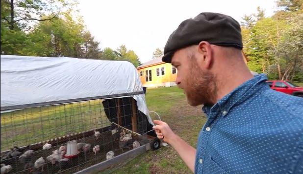 $100 Cattle Panel Chicken Tractor