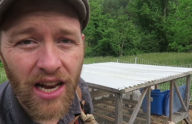 Knowing What Makes a Great Chicken Coop