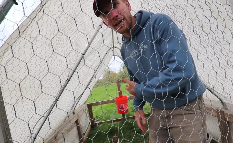Building the Stress Free Chicken Tractor