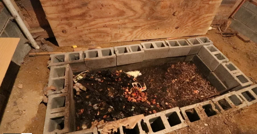 How To Grow Worms For Chicken Feed and Vermicompost