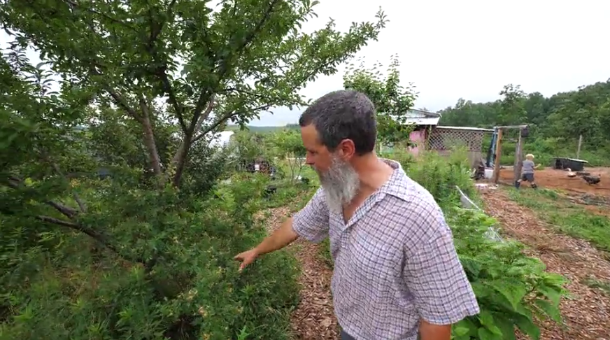 Create An Edible Forest (In Your Yard)