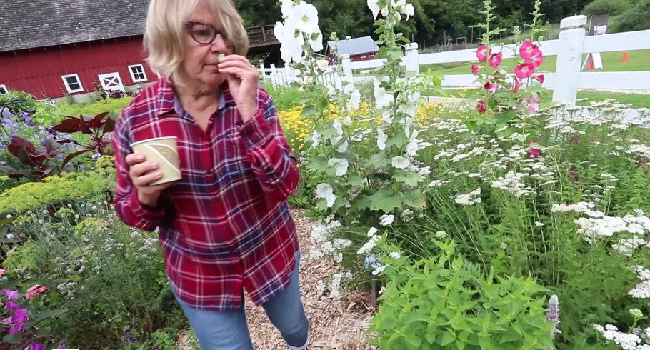Tour an Epic Seed Saving Garden