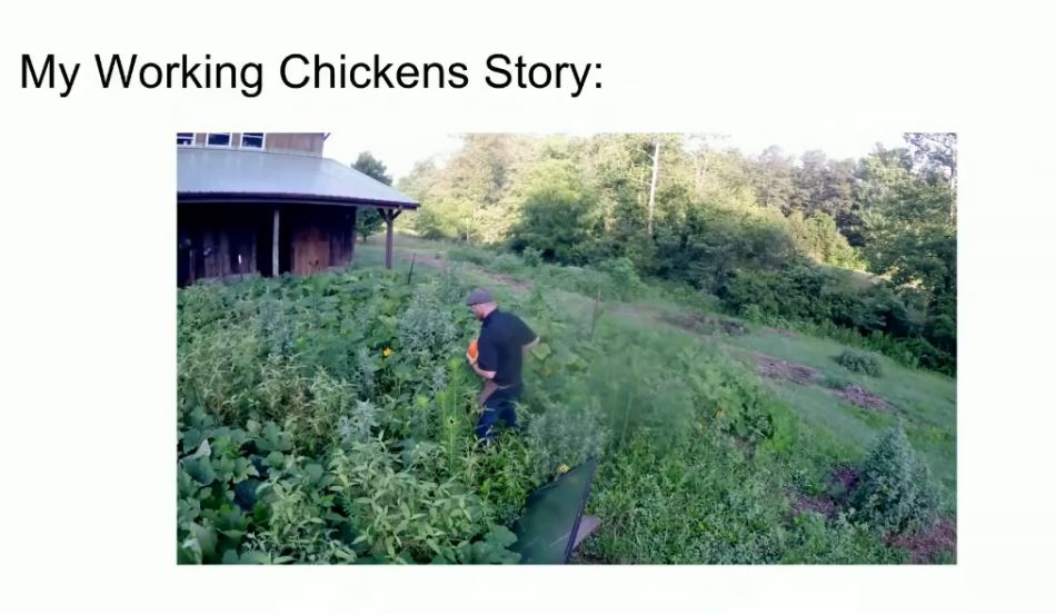 Chicken Power: 8 Strategies for Putting Your Chickens to Work