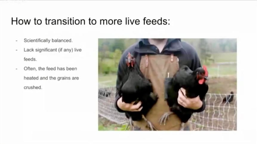 7 Essentials for Keeping Your Flock Alive and Happy