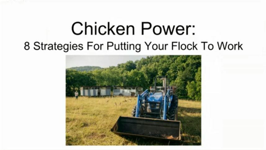 WEBINAR: Chicken Power- 8 Strategies For Putting Your Flock To Work