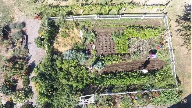 Intro to Permaculture #6: Bomb Proof Your Food Growing Systems With Diversity
