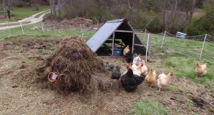 Intro to Permaculture #9: The Chicken Garden Miracle