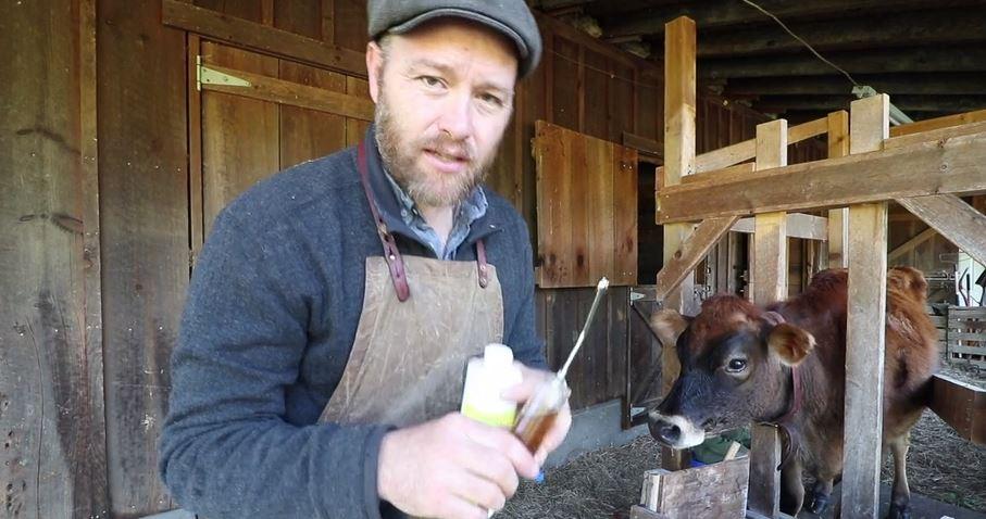 How I treat a SICK cow