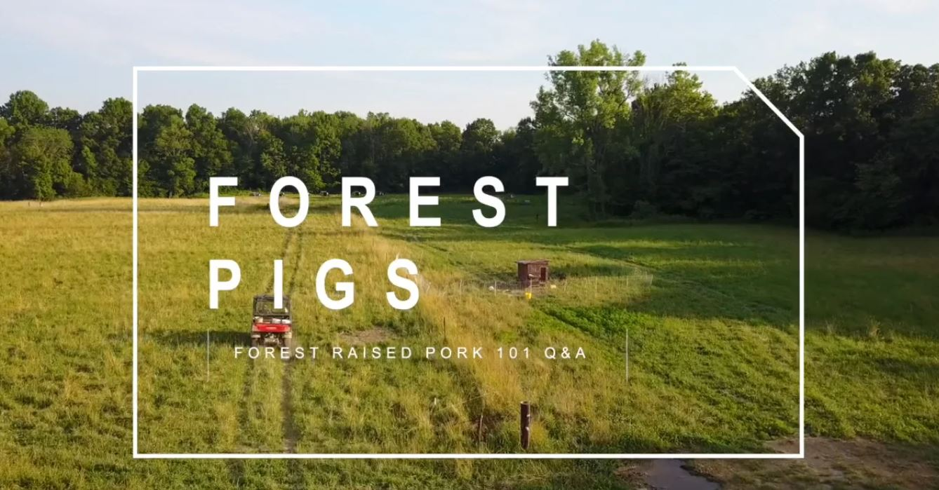 PART 6) Forest Raised Pigs 101 – Q&A | Feat. Darby Simpson