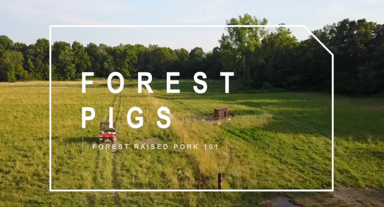 PART 5) Forest Raised Pigs 101 – A Profitable Enterprise for Your Farm | Feat. Darby Simpson