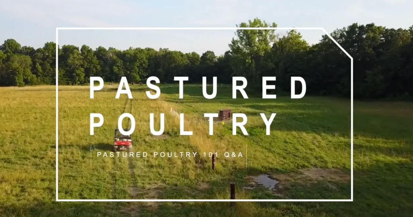 PART 4) Pastured Poultry 101 – Q&A | Feat. Darby Simpson