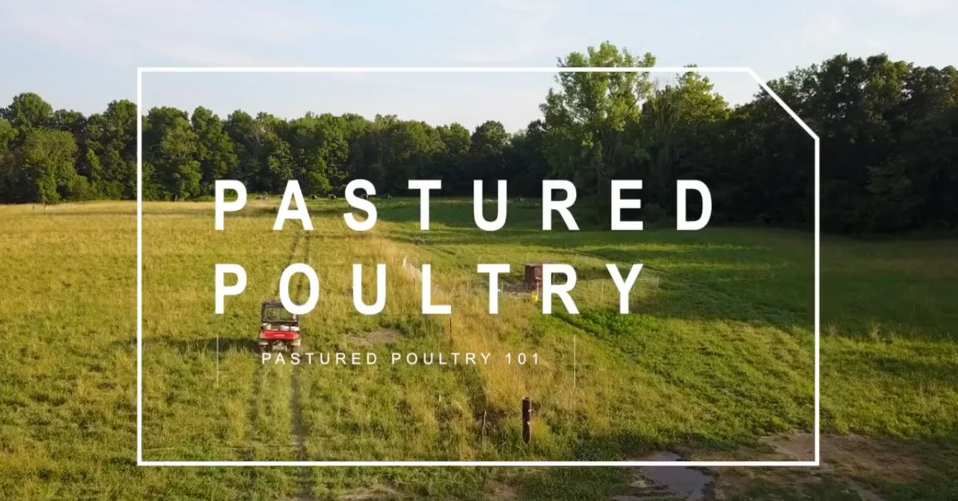 PART 3) Pastured Poultry 101 – Make $10000 an Acre Raising Pastured Poultry | Feat. Darby Simpson