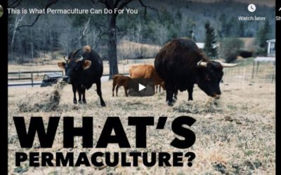 """Live Replay- 3 part training series, """"Intro to Permaculture – Designing Your Best Homestead EVER."""""""