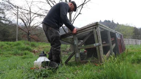 How to Grow an Instant Chicken Garden