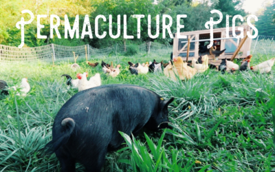 Permaculture Pigs | Feature Film