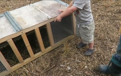 Building A Chicken Crib